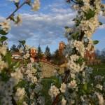 Пролеће у Манастиру Жича
